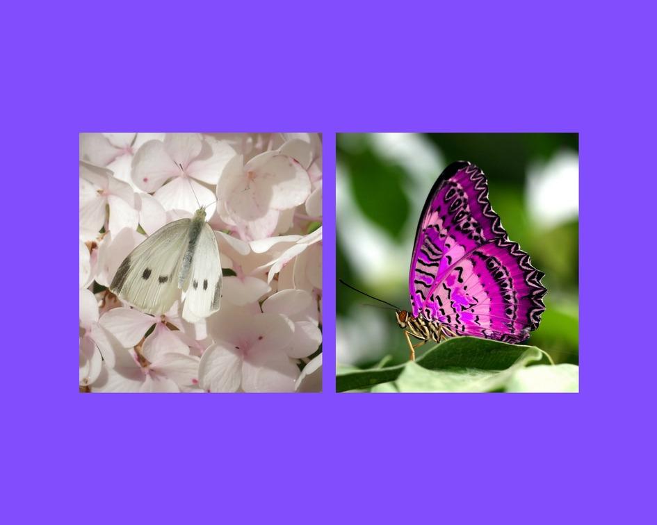 In welke vlinder herken jij jezelf?
